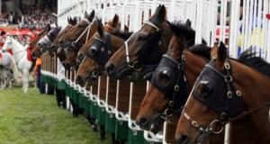 La proposta M5S punta a dare un ruolo attivo a tutti gli operatori dell'ippica ed a tutelare salute e futuro del cavallo dinanzi al rischio abbattimento