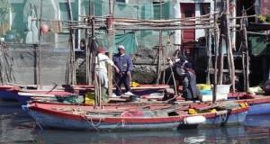 Il sottosegretario all'Agricoltura Castiglione conferma che la procedura sul fermo pesca si è sbloccata ed i pagamenti saranno effettuati a breve