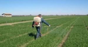 Una risoluzione M5S per chiedere la revisione delle etichette ministeriali e un efficace sistema di controlli sui territori per i prodotti fitosanitari