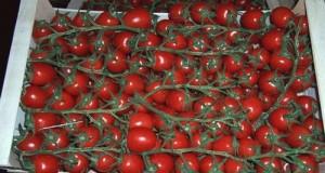Allarme internazionale escherichia coli per i pomodorini ciliegina dal Marocco: i cittadini non sono informati. Interrogazione M5S