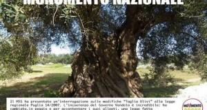 """Interrogazione M5S che raccoglie le istanze del """"Movimento per la tutela degli ulivi secolari e dei paesaggi di Puglia"""""""