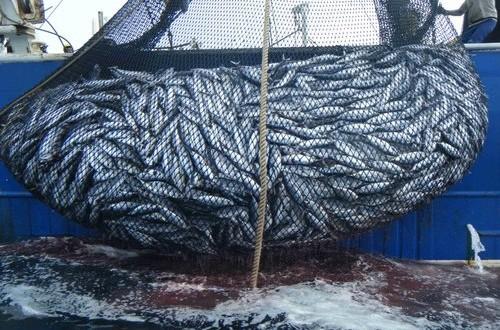 Risoluzione M5S sulla pesca: rendimento massimo sostenibile, piani di gestione degli sbarchi e redistribuzione delle quote di cattura del tonno rosso