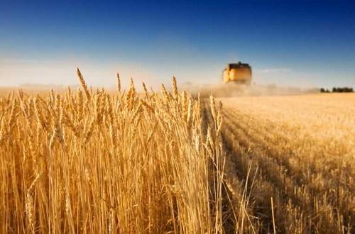Sul piano di sviluppo rurale nazionale (PSRN), che affiancherà i piani regionali, il M5S presenta una risoluzione in Commissione Agricoltura alla Camera