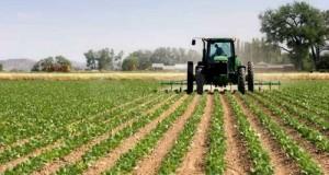 Il M5S presenta una risoluzione in Comm. Finanze e un emendamento al Decreto Milleproroghe per scongiurare il pagamento dell' IMU agricola del 26.01.15