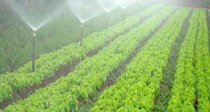 Necessario destinare i fondi per l'ammodernamento della rete irrigua per moltiplicare risorse ed investimenti a sostegno del reddito degli agricoltori