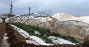 Ad un mese dalla nevicata di fine anno, proviamo a spiegare la complessa macchina burocratica della gestione dei rischi agricoli