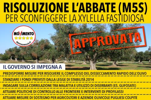 Dopo un anno e continue pressioni, vengono approvati gli impegni al Governo per contrastare la xylella e il disseccamento rapido dell'olivo