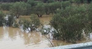 Il PD continua a prendere in giro gli agricoltori pugliesi presentando interrogazioni parlamentari che a nulla servono