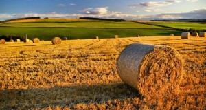 Il Mise risponde all'interpellanza del M5S sulla riforma di AGEA. Ora si attendono misure concrete per il futuro dell'ente agricolo