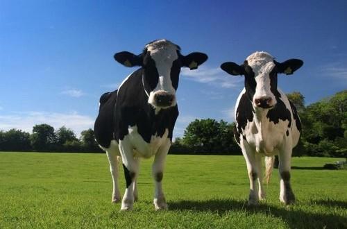 Approvata a Montecitorio la risoluzione M5S con impegni precisi al ministro Martina per il rilancio del comparto lattiero-caseario post quote latte