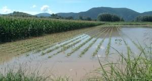 L'Ue finanzia, l'Italia no. Gli agricoltori vengono così lasciati soli sui danni ai raccolti e sui relativi rimborsi delle assicurazioni stipulate