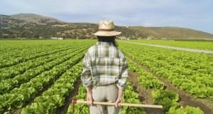 Il M5S si astiene sul voto al decreto 51 del ministro dell'Agricoltura Martina perché ritenuto non sufficiente per ridare smalto al settore primario.