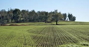I 5 Stelle organizzano a Latiano un incontro tematico sull'agricoltura con il deputato L'Abbate (M5S), l'agronomo Convertini e il Comitato No Enfiteusi