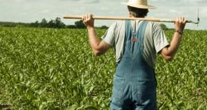 Accanto a provvedimenti da tempo attesi, non mancano le bocciature per gli interventi chiesti dalle parti sociali nella conversione del decreto Agricoltura