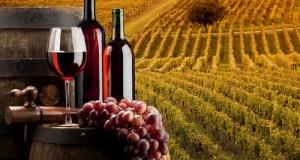 Entro gennaio 2016, l'Italia è chiamata a modificare il sistema di assegnazione delle autorizzazioni sul vino come imposto da Bruxelles. Risoluzione M5S