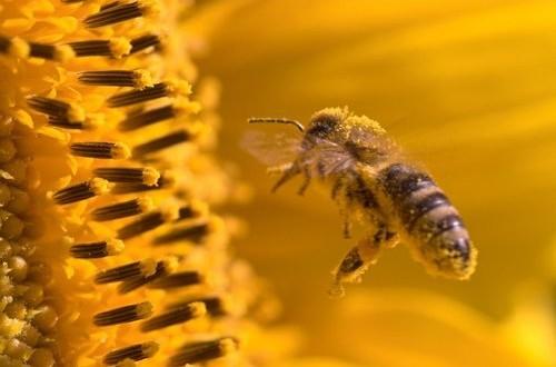 Le misure attuate in Calabria per contrastare la moria delle api non hanno raggiunto l'obiettivo di arginare il fenomeno. Interrogazione M5S