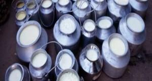 L'Ue conferma la multa di 30,5 milioni di euro all'Italia. Dopo la malapolitica è ora di interventi per il rilancio del settore del latte