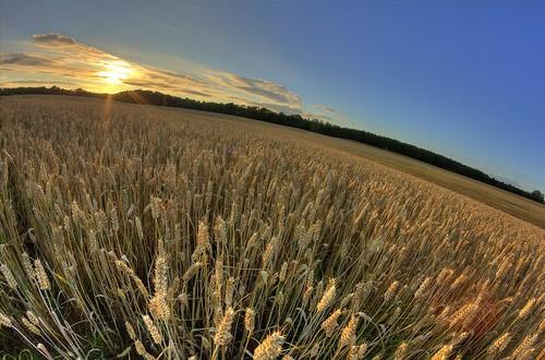 Risoluzione M5S in Commissione Agricoltura per impegnare il Governo a redigere un regolamento che renda le CUN efficienti ed al servizio degli agricoltori