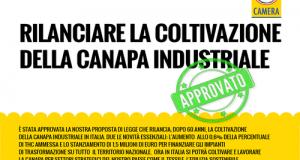 Ok unanime della Commissione Agricoltura alla proposta di legge Lupo (M5S) per il rilancio ed il sostegno all'intera filiera della canapa industriale
