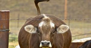 L'accordo sul prezzo del latte rappresenta solo un primo passo per il comparto lattiero-caseario