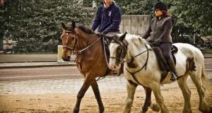 Intervista a Ucifweb sul premio Flambo, la proposta di legge M5S sul benessere dei cavalli ed il futuro dell'Ippica