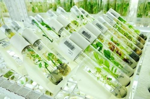 Approvata la legge sulla Biodiversità ma sarebbe stato preferibile dare più fondi per le spese vive delle banche del germoplasma e per la ricerca