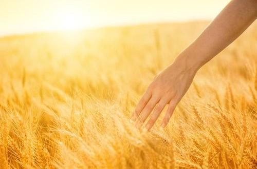 Il M5S chiede a gran voce la creazione della Cun, la Commissione Unica di Filiera, nonché maggiori controlli contro il grano di importazione