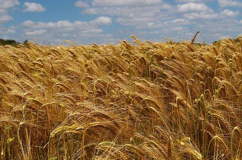 Dopo la risoluzione in Commissione Agricoltura, interrogazione M5S sulla guerra del grano in corso per comprende se e cosa intenda fare il ministro Martina