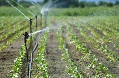 Il caos e gli scandali all'interno di Arif e dei Consorzi e la neonata Agenzia per l'Irrigazione della Puglia mettono a repentaglio i 300 mln del PSRN