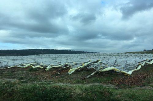 Coldiretti Puglia presenta il dossier sul crac agrumi ma gli agricoltori devono richiedere la CUN per la filiera agrumicola se vogliono superare la crisi