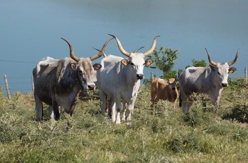 Il bando pubblico contiene gli strumenti necessari per apportare un miglioramento genetico del patrimonio zootecnico e della biodiversità animale