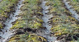 In Commissione Agricoltura, il sottosegretario Castiglione apre alla deroga al Fondo di solidarietà nazionale per le imprese danneggiate dal maltempo
