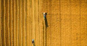 L'assicurazione Ricavo Garantito è strumento efficace con copertura parziale nell'eventuale calo di prezzo del grano rispetto alla media degli ultimi anni