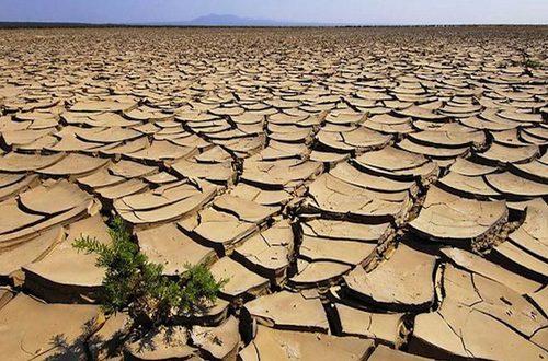 Dinanzi ad uno scenario che vede cali anche del 50% della produzione agricola pugliese, il M5S presenta una risoluzione per fronteggiare la siccità