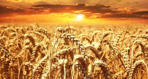Dopo l'eclatante nuovo caso accaduto al Porto di Bari sul grano importato, interrogazione M5S per chiedere chiarezza sui controlli