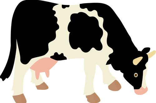 Secondo l'ultimo Rapporto Assolatte, la Puglia produce quasi 400mila tonnellate di latte vaccino, con una crescita del 4,3%. In testa Bari e Taranto