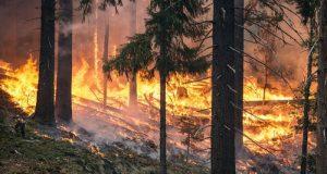 Le soluzioni da applicare per evitare che la Puglia sia ancora tra le regioni italiane più colpite dagli incendi boschivi