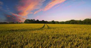 Gli emendamenti per il rilancio e la sburocratizzazione del settore agricolo presentati dal Movimento 5 Stelle alla Legge di Stabilità 2018