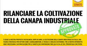 La Commissione Agricoltura del Senato approva definitivamente la legge Lupo per ridare slancio al comparto della canapa industriale