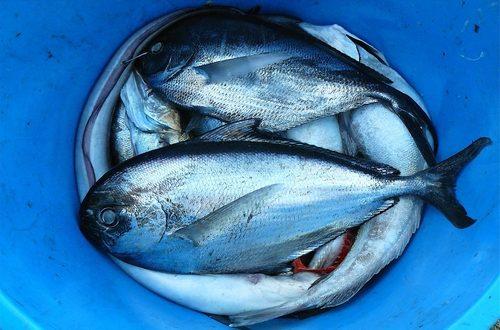 Nonostante il trend negativo nel lungo periodo, si assiste ad una inversione di tendenza dai dati che vede la Puglia tra le prime in Italia per catture e fatturato nella pesca