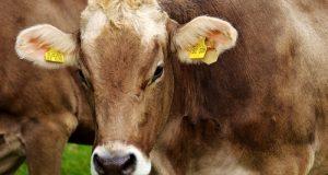 Entra in vigore il provvedimento normativo che accoglie le proposte in tema di trasparenza e tracciabilità chieste da anni dal M5S: sarà esplicitata la provenienza su latte e prodotti derivati