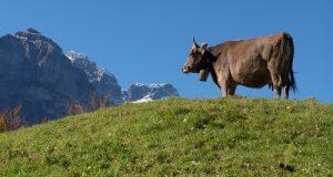 Il decreto del Ministero delle Politiche Agricole interesserà 24 Comuni della Puglia nelle zone di montagna ubicate nel Gargano