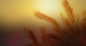 Plauso per l'accoglimento delle proposte M5S da parte del ministro Maurizio Martina sul Tavolo di filiera sul grano duro
