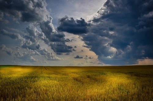 Nonostante i contratti di filiera per il grano duro tra agroindustria e coltivatori parlino chiaro, in atto un gioco al ribasso sfruttando le recenti piogge