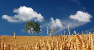 Alla Camera, il sottosegretario Alessandra Pesce conferma l'imminente costituzione della CUN (Commissione Unica Nazionale) sul grano duro