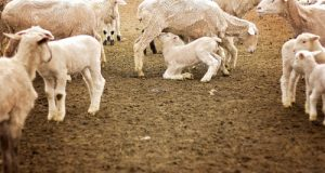 Il Decreto Emergenze Agricole prevede fondi per il sostegno del settore lattiero-caseario nonché nuove regole per la trasparenza e la tracciabilità