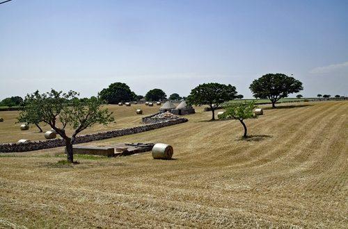 Campagna Puglia